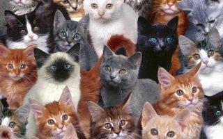 Как выбрать идеального котенка?