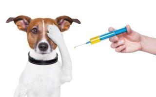 Особенности препаратов Фоспренил и Фронтлайн для собак