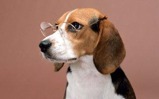 Особенности зрения собак