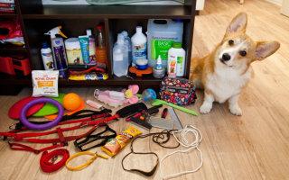 Аксессуары для повседневной жизни вашей собаки