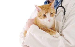 Эпилепсия у кошек: как вовремя распознать недуг и спасти питомца?
