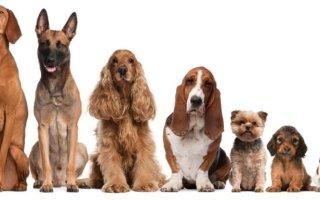 Как определить возраст собаки: самые надежные способы