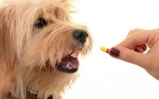 Преднизолон для собак