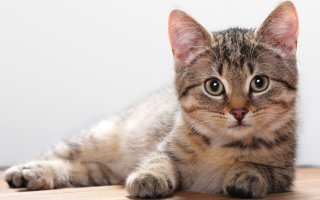 Послеоперационный период кастрированного котика