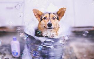 Все о правильном мытье собак