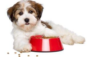 Профессиональный корм для собак Зооменю премиум-класса