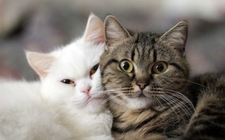 Когда болеют братья наши меньшие: кот мало ест и поносит