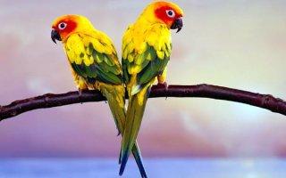 Самые-самые среди попугаев