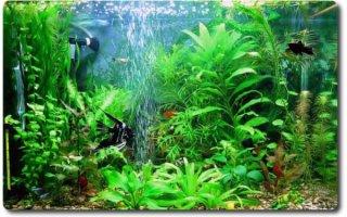 Выбираем аквариумный распылитель