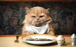 Что делать если кот отказывается есть и пить?
