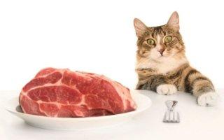 Как правильно выбирать лакомства для кошек?
