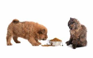 Можно ли давать собаке кошачий корм и как это отразится на ее здоровье