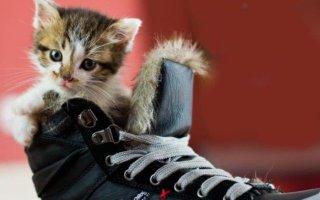 Как убрать запах кошачьей мочи с обуви: эффективные методы