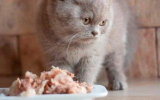 Чем кормить британского котенка