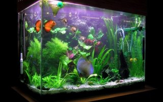 Как починить аквариум?