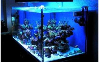 И рыбкам тоже нужен свет!