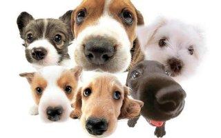 Клички девочек-собак