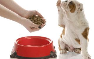 Раскрываем все секреты кормов Hills для питания собак