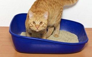 Какие бывают лотки для кошек?