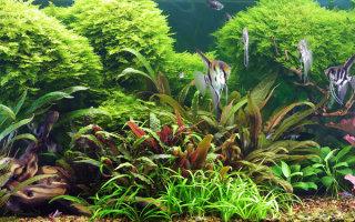 Как справиться с болезнями аквариумных растений?