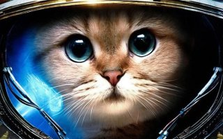 Кошка Фелисетт или первая кошка-космонавт