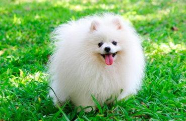 картинки пушистых собак