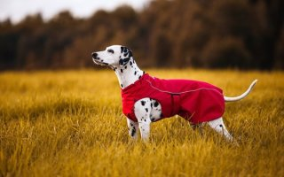 Заглянем в собачий гардероб – все об одежках для питомцев