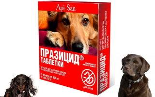 Празицид для собак в борьбе с гельминтами