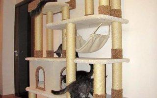 Как создать игровой комплекс для кошки?