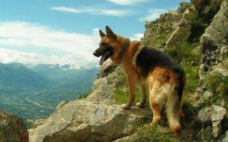 Рейтинг самых умных и легко обучаемых пород собак