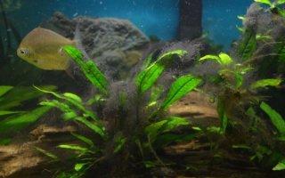 Сайдекс – спасение от нежелательных водорослей или яд для аквариума?