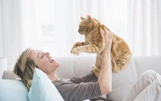Эффективные способы и средства борьбы с запахом кошачьей мочи