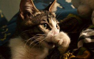 Сопливый носик у кошки – лечим питомца вместе