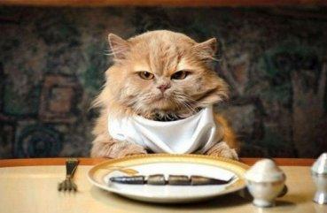 Обзор корма для кошек и котят фирмы Brit: виды, особенности и отзывы