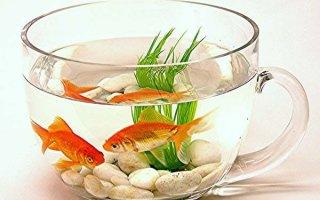 ТОП 5 лучших видов рыбок для начинающих аквариумистов