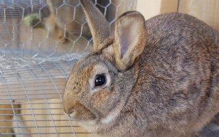 Дом для кроликов: строим клетки своими руками