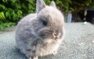 Декоративные кролики – питание и уход
