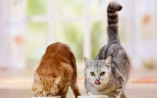 Котенок ест только влажный корм и не пьет
