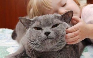 Возможная беременность 7-летней Шарпей и проблемы со щеками у кота