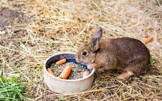 Что любят кушать кролики и чем их кормить