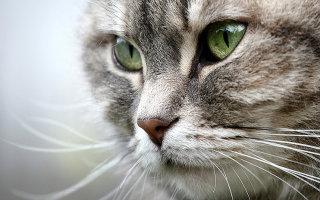 Предназначение кошачьих усов и хвоста