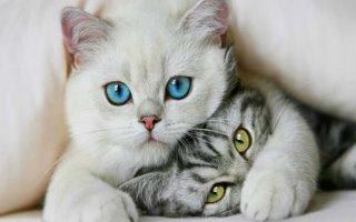 Решаем проблемы со здоровьем котов: ответы специалиста на вопросы читателей