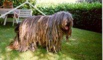 Рейтинг самых пушистых пород собак в мире, название, описание и фото питомцев
