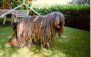 Экзотические и неизвестные породы собак: интересные факты