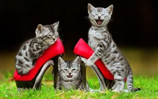 Как отучить кошку гадить: дельные советы и эффективные способы