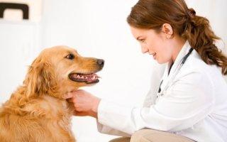 Все о приступах эпилепсии у собак