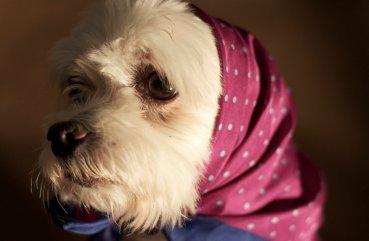 Ветеринария суставы стареющей собаки лечение при боли в коленном суставе