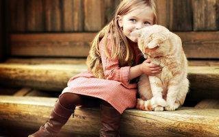 Точно и быстро определяем возраст кошки по человеческим меркам