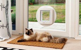 Разновидности двери для кошек