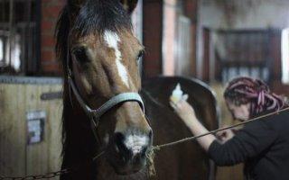 Правильный уход за лошадью и ее копытами